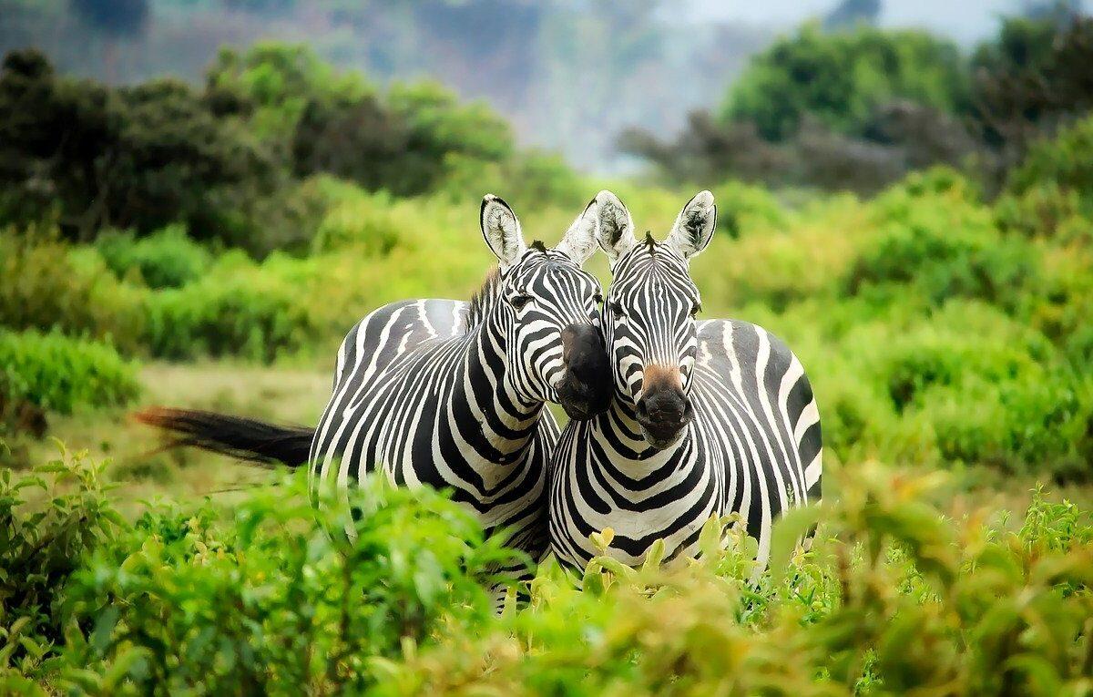 Safari v Africe – nevšední dovolená v nitru nedotčené přírody